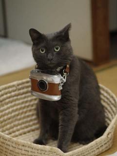 Cameranyan_s