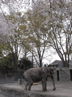 110410_inokashira_s112