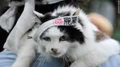 Nuclear_protests_cat_afp