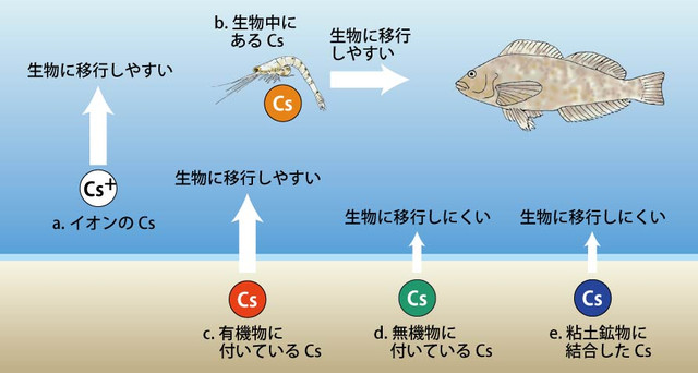 120301_fukushimaoki